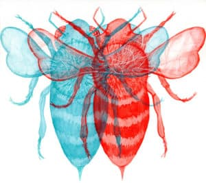 A flukelady watercolor painting of a bee in anaglyph-3D style (red/blue)